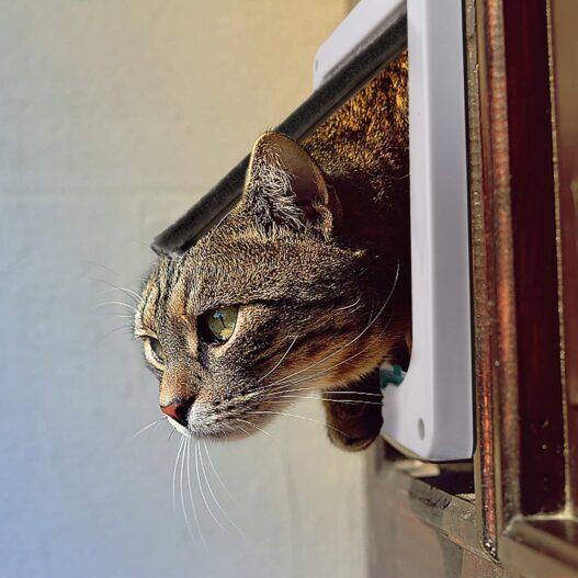 "Depets Medium Cat Flap Door with 4 Way Lock (Outer Size 7.5"" x 7.8""), Magnetic Pet Door Kit White, Weather-Resistant Cat Door for Cats & Doggy"